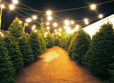 Annunciation Christmas Tree Lot